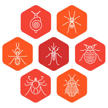Pest insect hexagon line icon set for exterminator services
