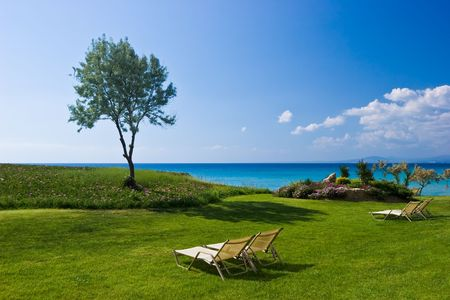 lux: Olive tree and lounge chairs on the beach