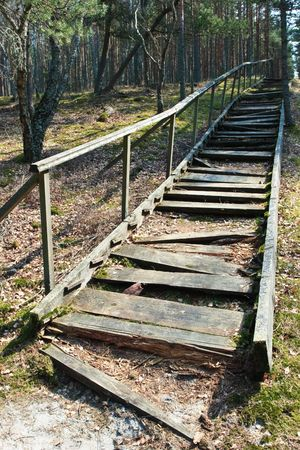 Broken weathered wooden stairs at pine forest photo