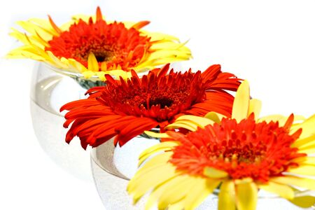 Red and yellow Gerbera flowers in wine glasses on white background photo