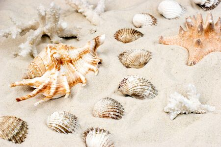 clam beds: Seashells, starfish and corals on sand, selective focus Stock Photo