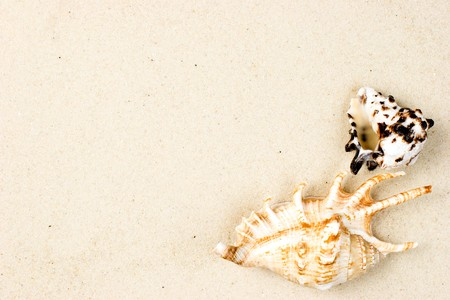 clam beds: Seashells on sand background