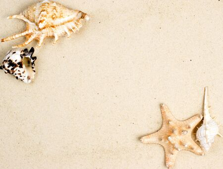 clam beds: Seashells and starfish on sand background