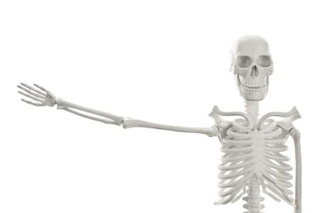 alzando la mano: Modelo de esqueleto humano de pl�stico con la mano sobre fondo blanco