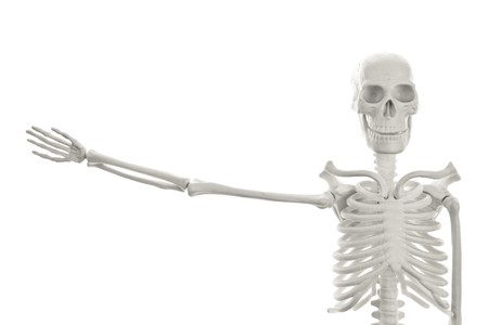 skeleton hand: Plastic human skeleton model with outstretched hand on white background Stock Photo