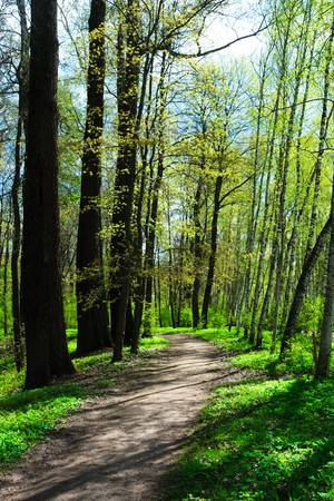 Empty hiking trail at spring park Stock Photo - 4382945
