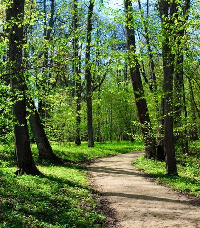 Empty hiking trail at spring park Stock Photo - 4382946