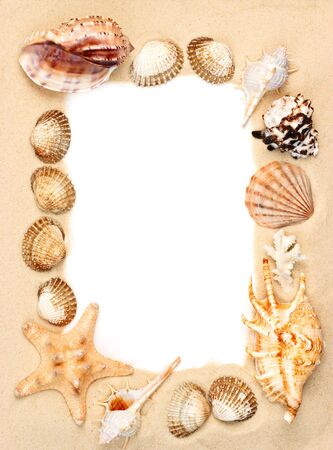 clam beds: Seashells and starfish on sand picture frame