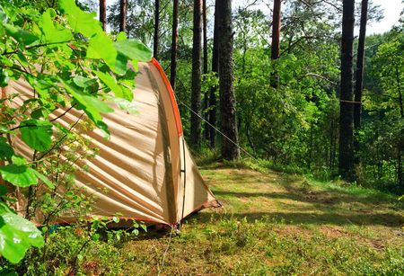 thicket: Camping tent in a sunny forest after rain Stock Photo