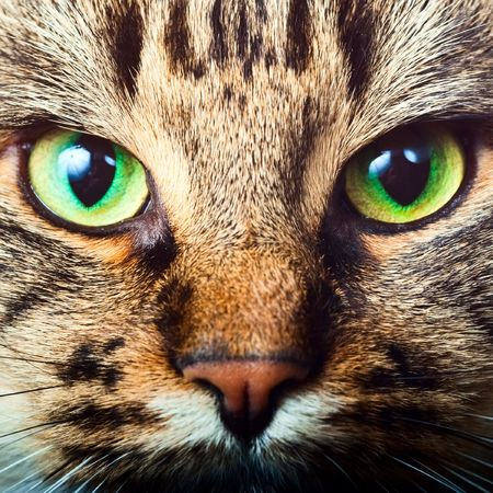 cat eye: Close-up portrait of tabby cat Stock Photo