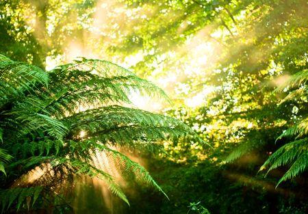 Gießen Sie Sonnenlicht Sonnenstrahlen durch Farn-Blätter in einem Regenwald bei New Zealand