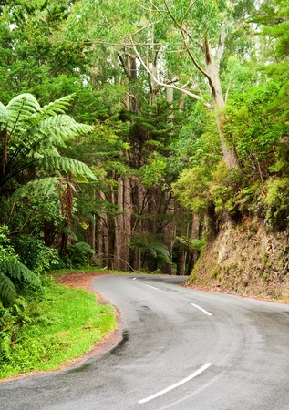 Winding road through a rainforest, New Zealand photo