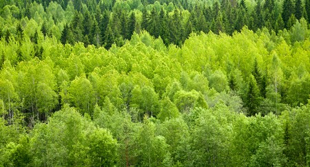 greenwood: Dense mixed forest panoramic view Stock Photo