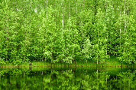 conifer: Boreal Forest reflected in river natural background Stock Photo