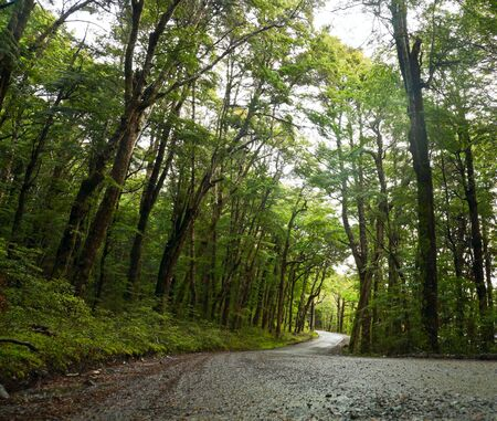 Dirt road through dense rainforest at New Zealand photo