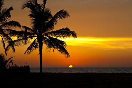 sunset palm trees: Palm tree silhouette against evening sky at sunset