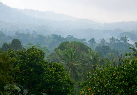 mystical forest: Tropical rainforest mountain covered in fog
