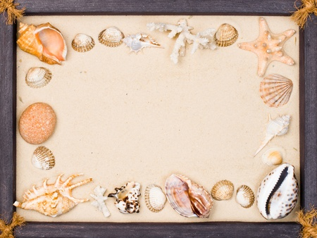 Wooden frame with seashells and starfish on sand photo