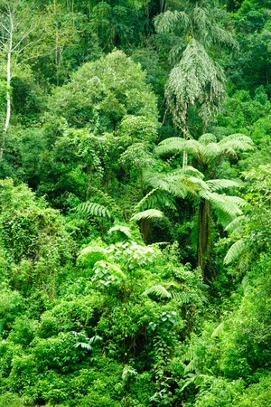 Dense jungle natural background, Sri Lanka photo