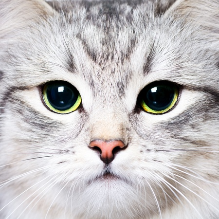 black head and moustache: Close-up portrait of a kitten with big green eyes