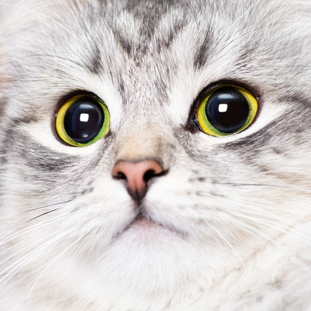 Close-up portrait of a kitten with big green eyes photo