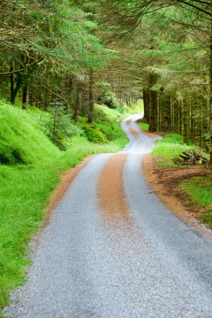 greenwood: Scenic winding road through green forest in Scotland