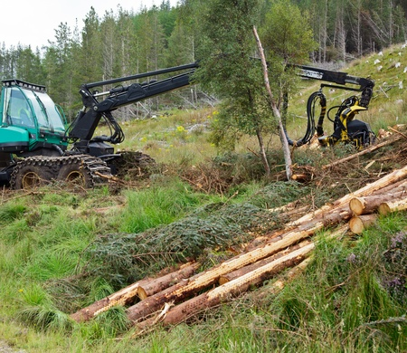 logging: Heavy forestry vehicle harvester employed in cut-to-length logging operations