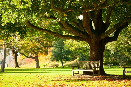 Bench under the tree in the Royal Botanic Gardens in London photo
