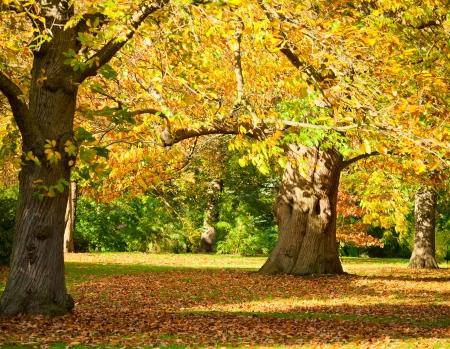 botanic: Autumn trees in the Royal Botanic Gardens in London