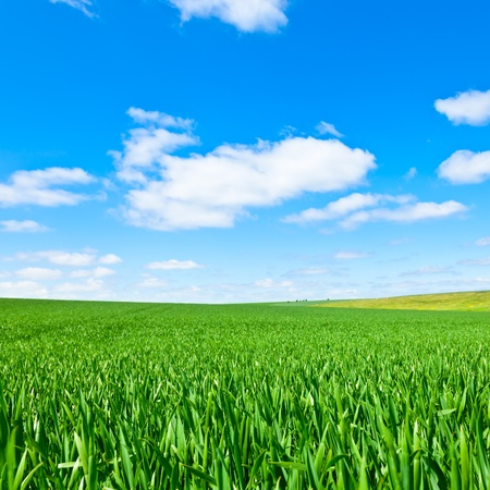 Summer landscape with green grass and blue sky photo
