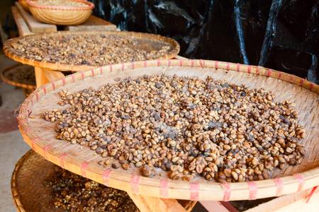 kopi: Civet feces with embedded coffee beans - Weasel coffee (Kopi Luwak or Civet coffee)