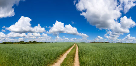 unsurfaced road: Panoramic view of summer field with green oats, dirt road and blue cloudy sky