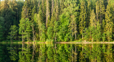 greenwood: Summer forest reflecting in a lake