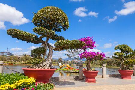 dalat: Bonsai trees at City flower garden in Dalat, Vietnam