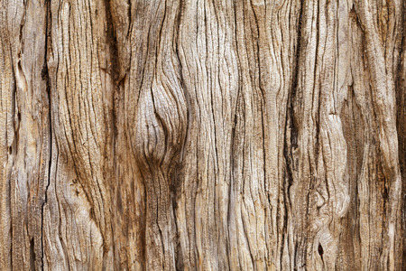 trunk: Weathered tree trunk textured background