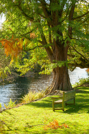 tranquil: Wooden bench under the tree facing small pond in the Royal Botanic Gardens in London Stock Photo