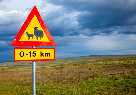 sheep road sign: Real Sheep Crossing traffic sign against cloudy sky in Iceland