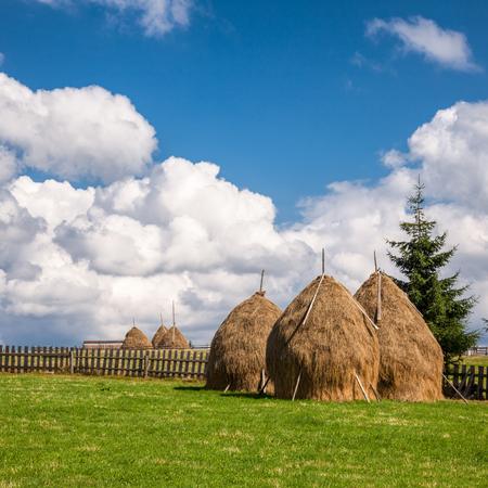 paisaje rural: Heno apilado Loose construido alrededor de un poste central en los Cárpatos, Rumania Foto de archivo