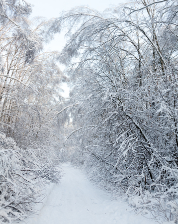 snow tree: Snowy country road through winter forest Stock Photo