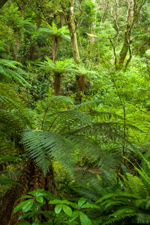 temperate: Fern trees in a temperate rainforest of New Zealand Stock Photo