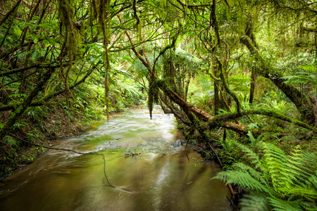 Small stream or brook in a heart of rain forest in New Zealand