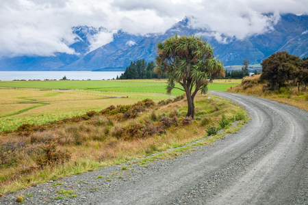 unsurfaced road: Winding gravel road through pasture in New Zealand with cabbage tree and cloudy mountains in background Stock Photo
