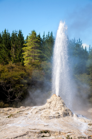Lady Knox Geyser erupting at Wai-O-Tapu  geothermal area in New Zealand Stock Photo