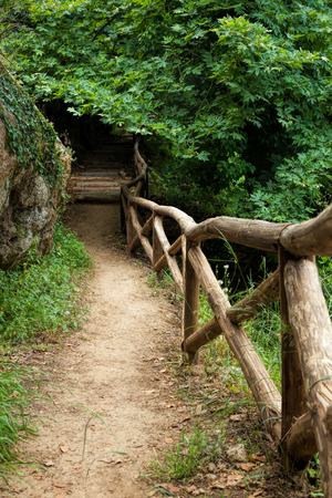 dense forest: Pathway through dense forest and wooden fence in Crete