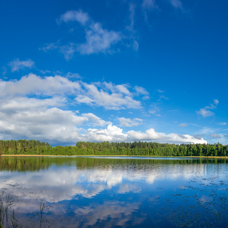 atmospheres: Summer landscape with sunny forest lake