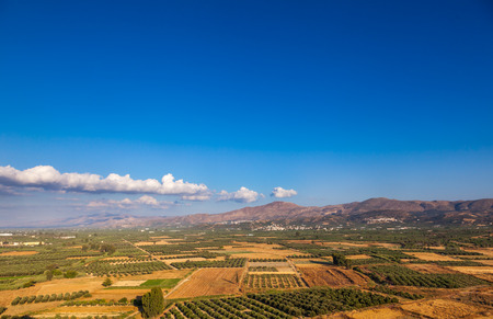 Scenic view of summer Crete Greek Island with olive tree plantations and mountains in background