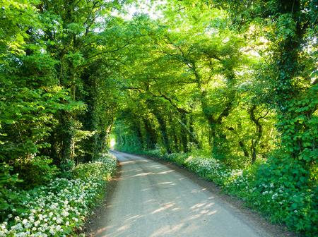 Les arbres et les buissons sur une route rurale formant un tunnel en angleterre du sud Banque d'images - 98134215