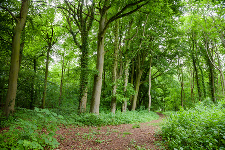 Scenic dirt road through green forest  in Southern England