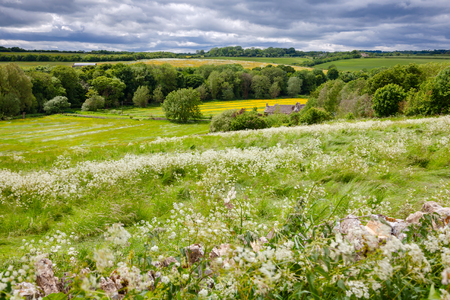 Summer english rural landscape with flower field rolling hills and stormy sky in background.  Southern England, UK