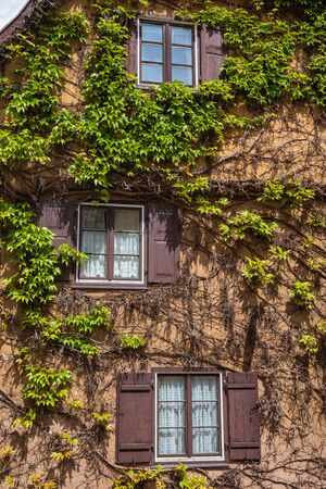 House wall covered by climbing plant leaves in Dinkelsbuhl, Central Franconia, Bavaria, Germany, a popular travel destination on Romantic Road touristic route